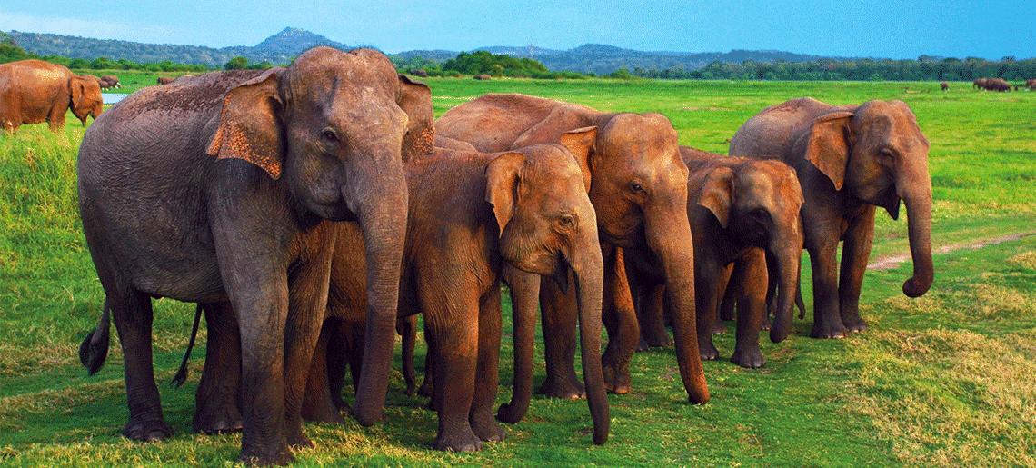 Kandy – Pinnawala – Peradeniya – Nuwara Eliya