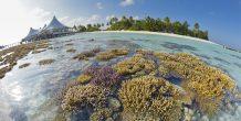 coral en Safari Island Resort & Spa Maldives