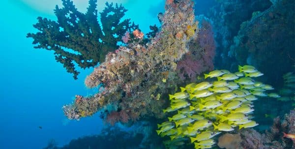 bucear en Sun Aqua Vilu Reef