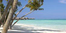 playa y palmeras en Shangri-La's Villingili Resort