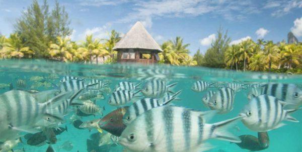 vida marina de St. Regis Bora Bora Resort