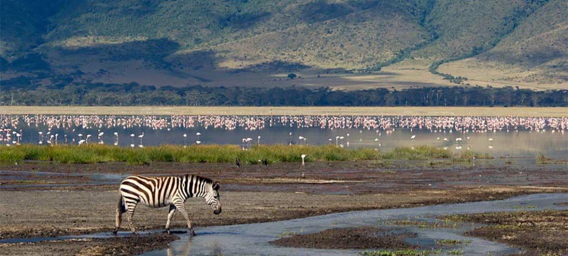Seronera – Ngorongoro