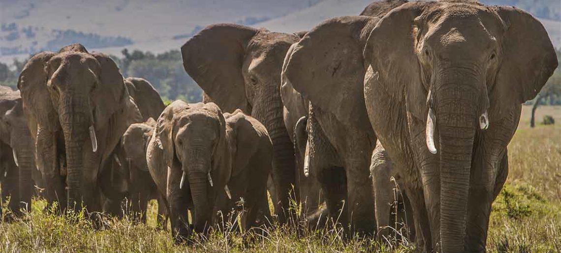 Kenia: Visita al Orfanato de elefantes de Daphne Sheldrick